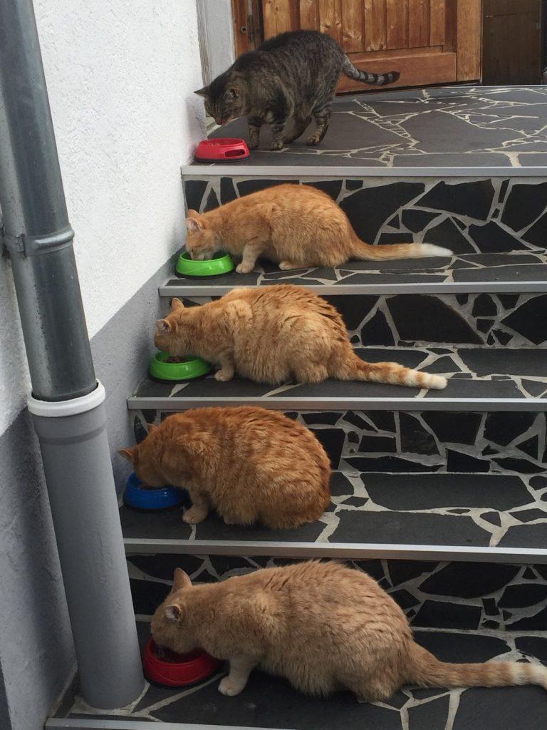 Katzenfamilie wird gefüttert