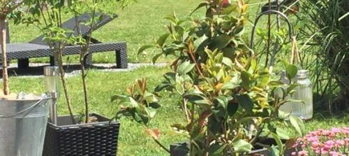 Neues für meinen Garten –  Dank Netzshopping