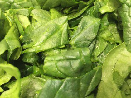 frischer Spinat geputzt und grob geschnitten