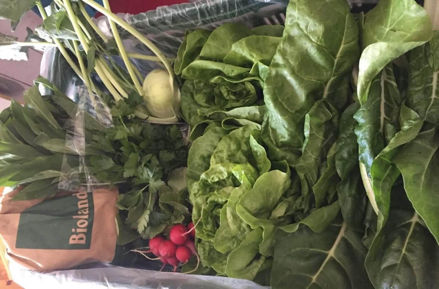 Inhalt der Gemüsekiste KW 17