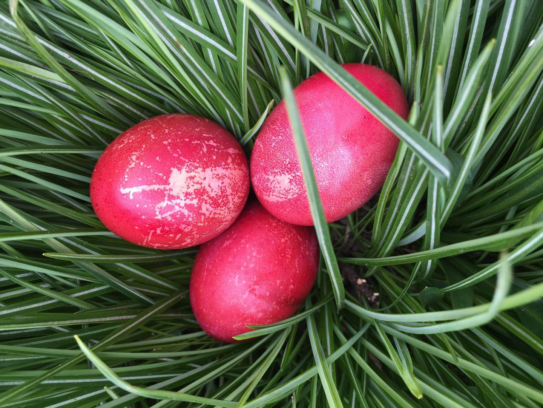 Ostereier gefärbt mit roter Bete