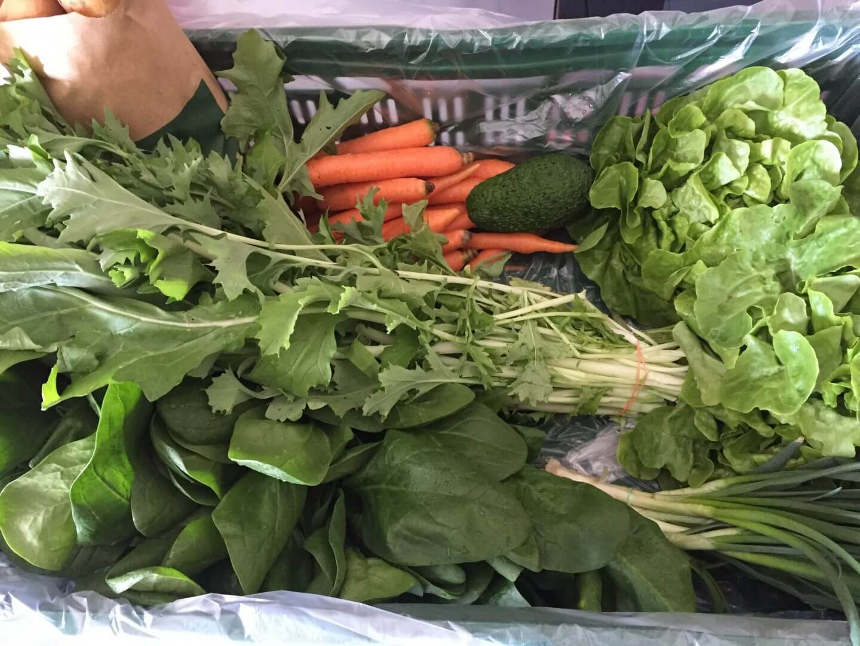 Inhalt Gemüsekiste KW 16