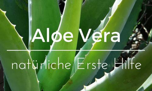 Aloe Vera – natürliche Erste Hilfe
