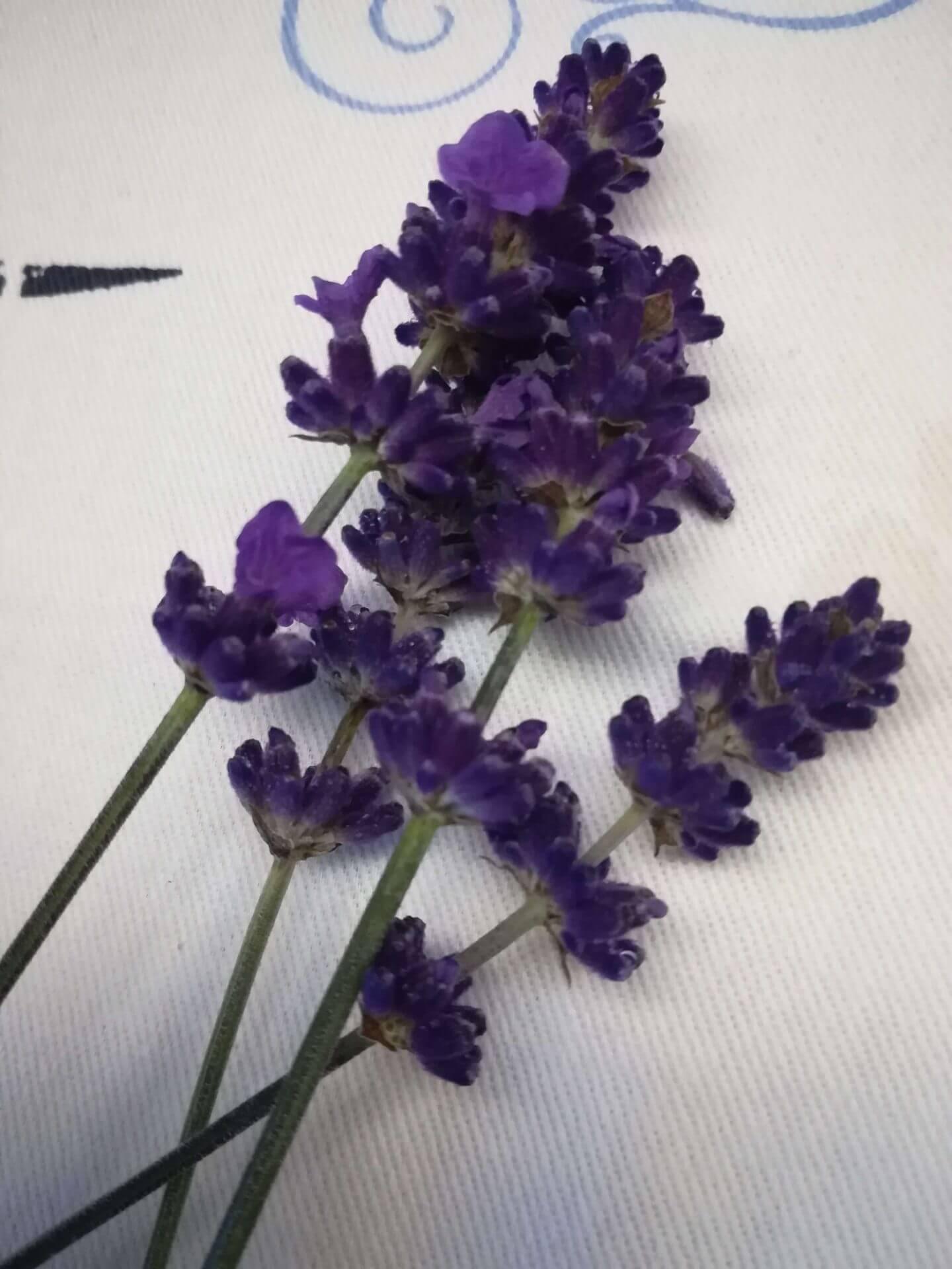Lavendelblüten (1)