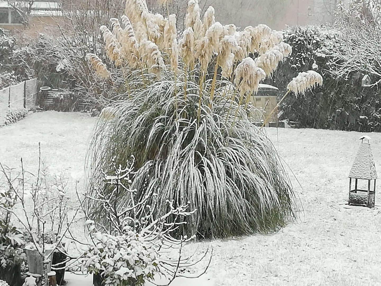 Schnee zum zweiten Advent 2017