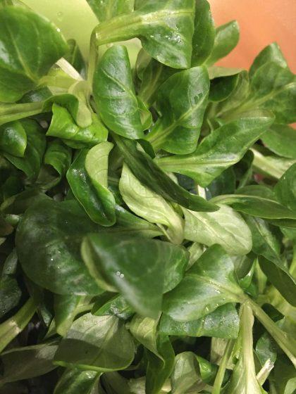 Feldsalat gewaschen (1)