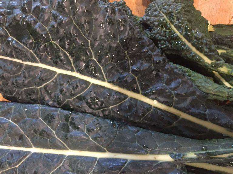 Palmkohlblätter (1)