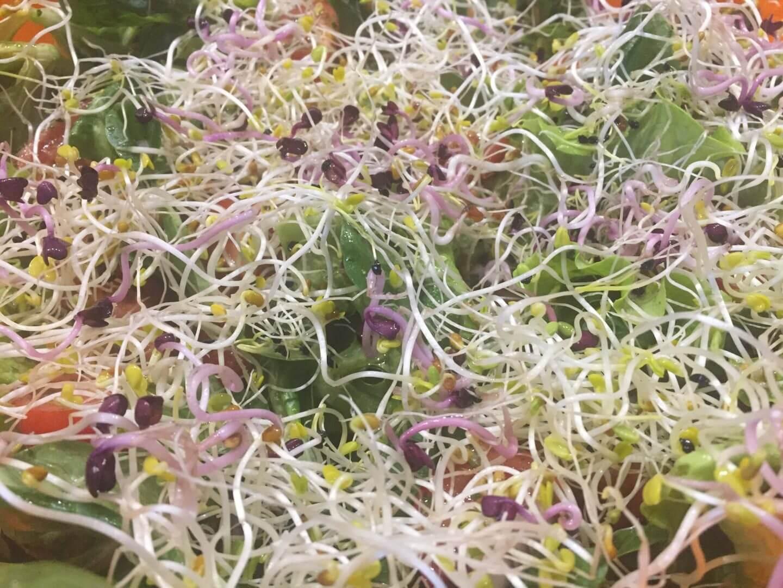 Gemischter Salat mit dreierlei Sprossen