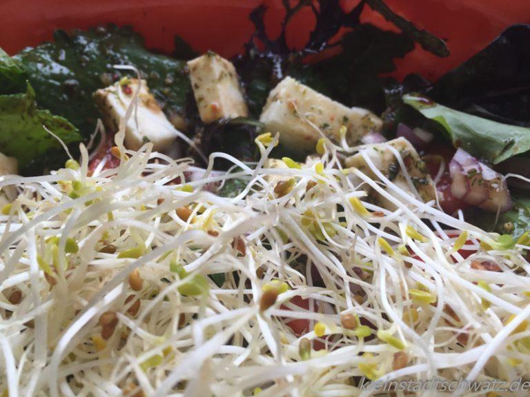 Salat mit Alfalfa-Sprossen