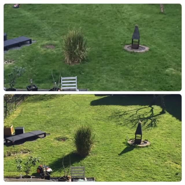 Vergleichsbild Garten