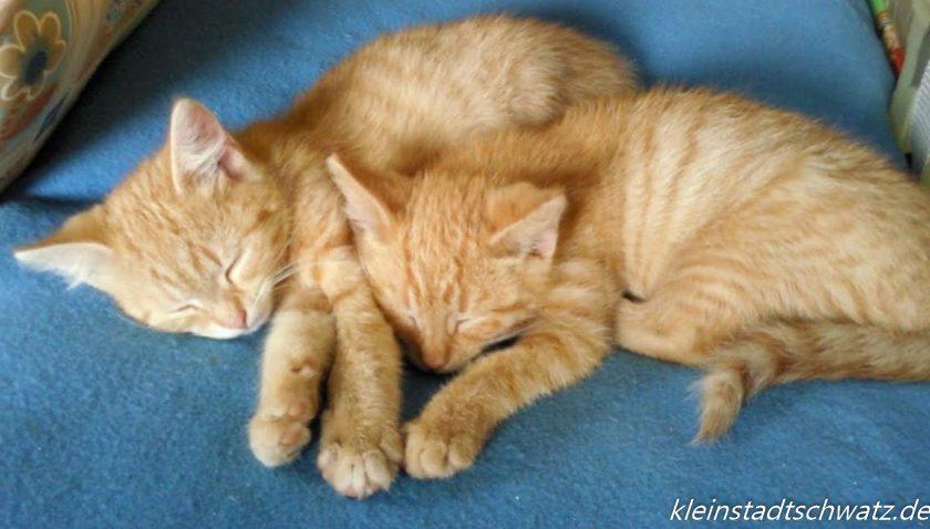 Zwei unserer Katzenkinder