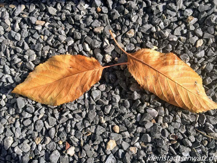 Goldener Oktober -zwei Kirschbaumblätter im Splitt