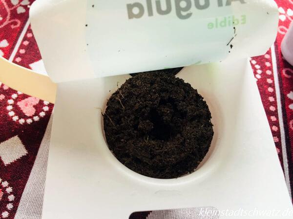 Emsa Smart Garden - Smart Soil Kapsel Rucola