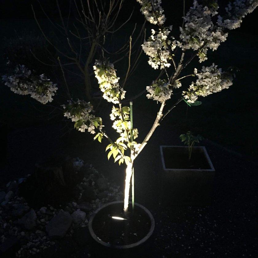 LED Gartenstrahler beleuchtet den Terrassen Kirschbaum