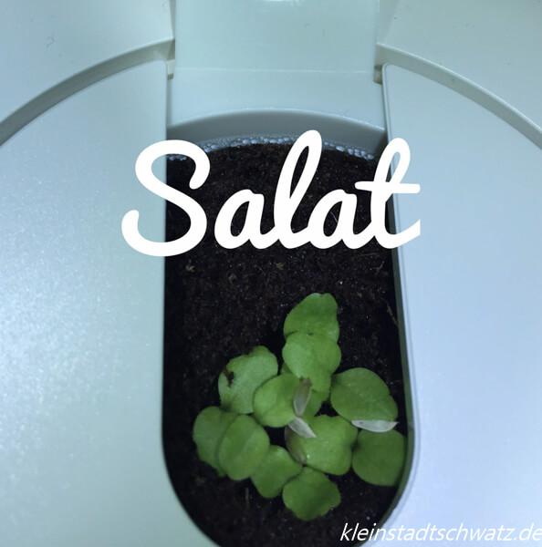 Salat Tag 4