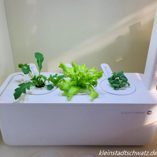 Smart Garden von Emsa Tag 14