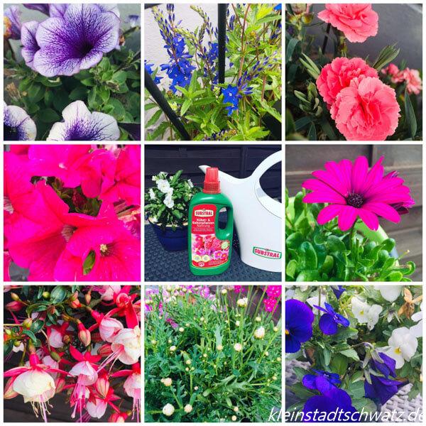 Blühende Pflanzen dank Substral in Woche 6